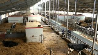 """getlinkyoutube.com-""""Kto kocha krowy, ten powinien mieć właśnie taką oborę"""""""