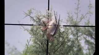 getlinkyoutube.com-PIGEON HUNTING ARG 1 KALIBRGUN 5 5
