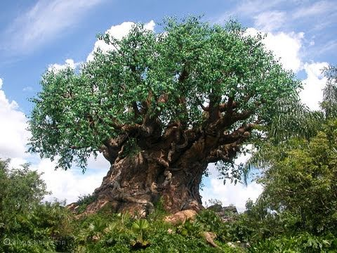 Disney's Animal Kingdom Theme Park Tour Overview 2011 HD!