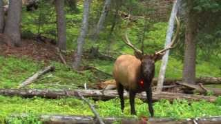 getlinkyoutube.com-13 year old shoots elk in the chest!