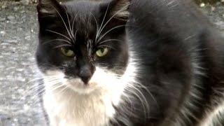getlinkyoutube.com-切ない 猫が離れてくれない 雨の夜に猫が待ってた NNNですよ~