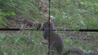 getlinkyoutube.com-Hunting Old Florida Squirrel Journal 2: .25 Marauder Squirrel Action Air Gun