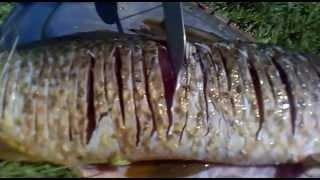 getlinkyoutube.com-preparar um peixe para assar na margem do rio