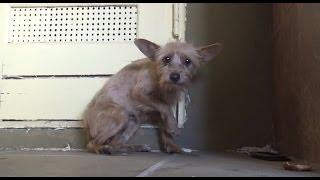 getlinkyoutube.com-Esse Cachorro Estava Abandonado, Quando um Homem Apareceu e Fez algo Simplesmente Emocionante
