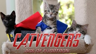 Kittens recreate Marvel's Avengers