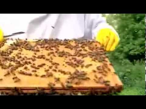 Beekeeping Tips Beekeepers Supplies, Equipment and How To Raise Bees