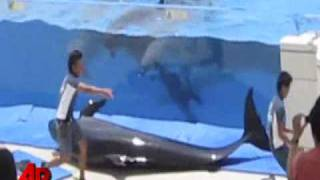 getlinkyoutube.com-Raw Video: Dolphin Jumps Out of Tank During Show