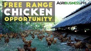 getlinkyoutube.com-Free Range Chickens: Pamora Farm's Success Story In Free Range Chickens | Agribusiness