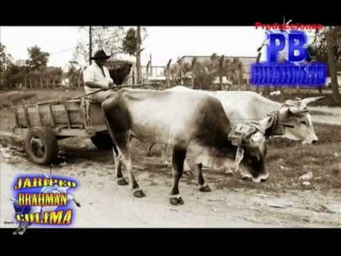Historia del Jaripeo, Charreria, Rodeo americano y de Rcho. La Herradura