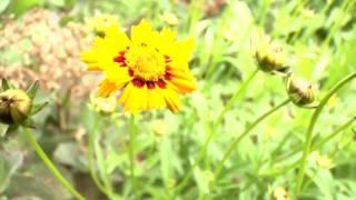 getlinkyoutube.com-Nature in HD
