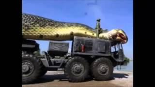 getlinkyoutube.com-Ular terbesar di dunia ( The worl biggest snake )
