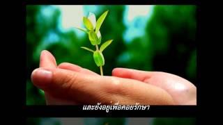 getlinkyoutube.com-ต้นไม้ของพ่อ