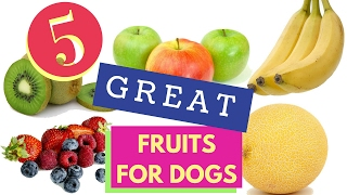 getlinkyoutube.com-5 Great Fruits For Dogs