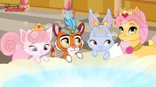 getlinkyoutube.com-Whisker Haven Tales - Hat's a Wrap! - Official Disney Junior UK HD