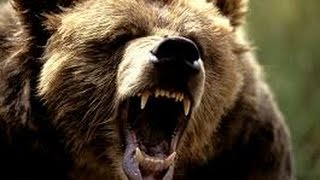 National Geographic Predator CSI Bodiless Bears