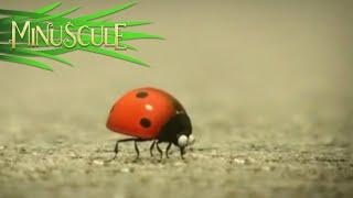 getlinkyoutube.com-Minuscule - Best Of Ladybug / Best Of Coccinelle