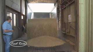 getlinkyoutube.com-Live Bottom Trailer -Hauling Grain (Trout River)
