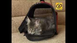 getlinkyoutube.com-Домик для кота - выбор сумки-переноски, советы