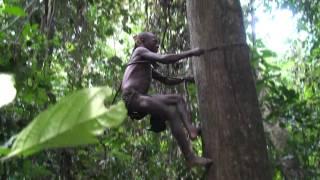 getlinkyoutube.com-Pygmies - The Children Of The Jungle