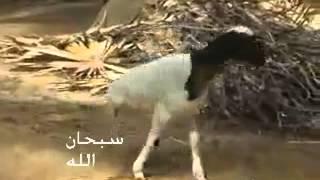 getlinkyoutube.com-allah ka mojza