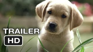 getlinkyoutube.com-Quill The Life of a Guide Dog Official Trailer #1 (2012) HD Movie