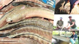 """getlinkyoutube.com-เศรษฐีเกษตร 22/8/58 : """"การเลี้ยงปลาช่อนระยะสั้น"""" กำไรไร่ละ 1 แสน"""