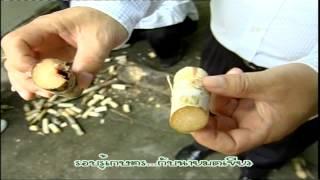 getlinkyoutube.com-รอบรู้เกษตรอ้อย100ตัน 3/11