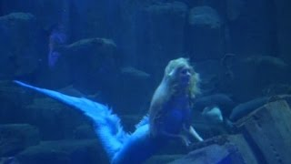 getlinkyoutube.com-Putri Duyung Membuat Kegemparan di Aquarium Paris