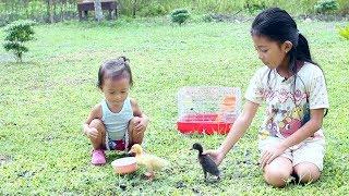 Shinta Memelihara Anak Bebek Lucu  Cute Ducklings For Kids