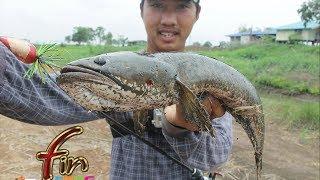 getlinkyoutube.com-FIN frog # กบ FIN ถล่มปลาช่อนยักษ(ข้างทาง)