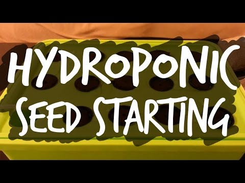 Easy Seed Starting for Hydroponics