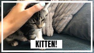 NIEUWE KITTEN & SOLICITATIE GESPREK!! | JULIA VAN BERGEN #Weekvlog