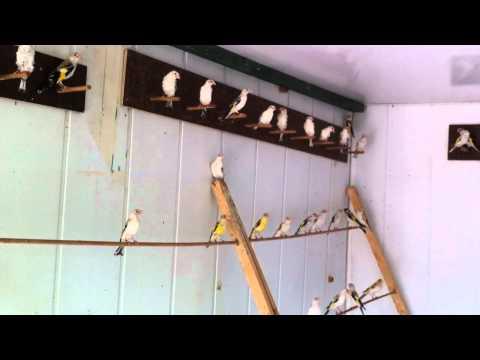 Mutasyon Saka Üretimi (Cevat Anık) 2012 İstanbul / Turkey --- (4)
