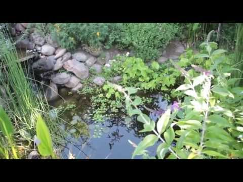 Permaculture Garden - 6 Reasons To Have a Pond