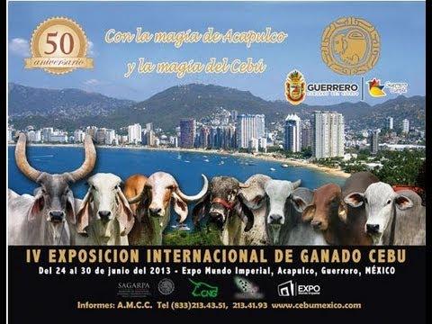 Mulato II en la Exposicion Internacional de Ganado Cebu, Acapulco, Gro 2013