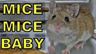 getlinkyoutube.com-How NOT to Keep Mice Out of an RV!