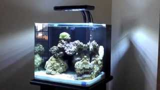 getlinkyoutube.com-Nuvo 30 Gallon Aquarium by Innovative Marine
