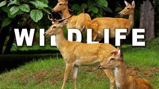 getlinkyoutube.com-WILDLIFE IN 4K (ULTRA HD) 60fps