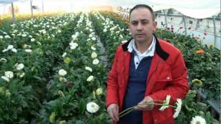 getlinkyoutube.com-agricultura -floricultura