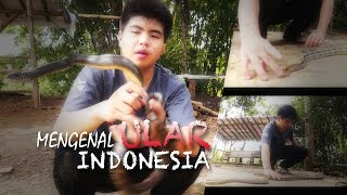 getlinkyoutube.com-Mengenal Ular Indonesia