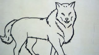 getlinkyoutube.com-How to Draw a Wolf (Cara Menggambar Srigala)