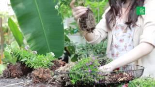 getlinkyoutube.com-กระถางต้นไม้ จาก ฝาพัดลมเก่า : คอลัมน์ ลงมือ นิตยสารบ้านและสวน มิถุนายน 2557