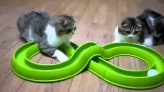 getlinkyoutube.com-طرائف القطط..  قطط مضحكة جداً... شاهد واضحك بس