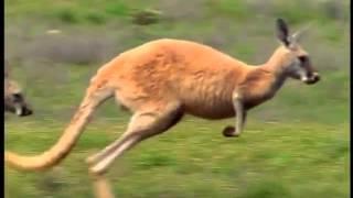 getlinkyoutube.com-baby einstein WORLD ANIMALS 5