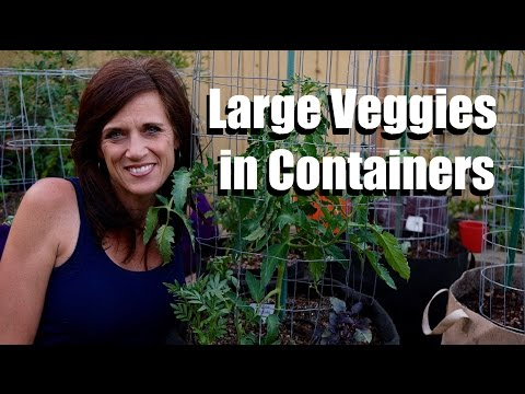 Growing Large Vegetables in Containers - Tips for Success