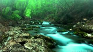 getlinkyoutube.com-FOREST CREEK Nature Sounds   11 Hours (For stress relief, relaxation & sleeping)