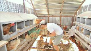 getlinkyoutube.com-THE EGG COLLECTOR - Inside a Funny Organic Egg Farm