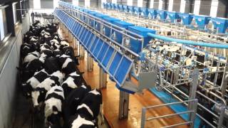 getlinkyoutube.com-Dairymaster state-of-the-art 36-unit rapid-exit parlour on Kilkenny farm