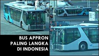 BUS PALING LANGKA di Indonesia