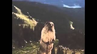 getlinkyoutube.com-Screaming Beaver Vine